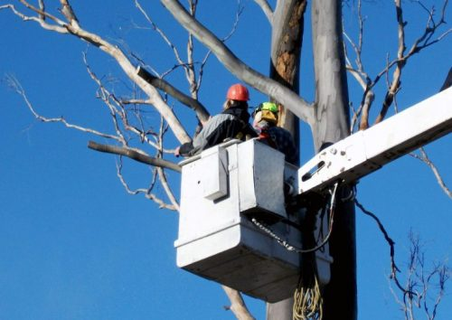 Dead tree removal Gold Coast